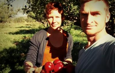 srjr apples